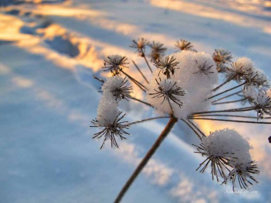 Frozen flower and sun hitting it from the side