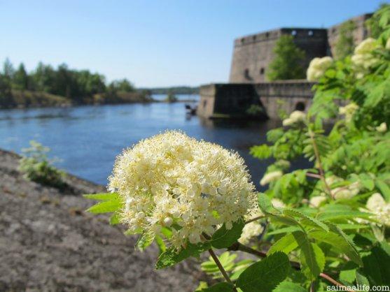 backside-of-olavinlinna-castle