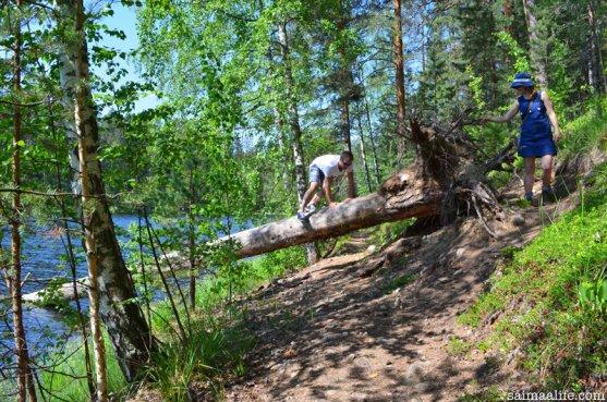 nature-trails-in-punkaharju