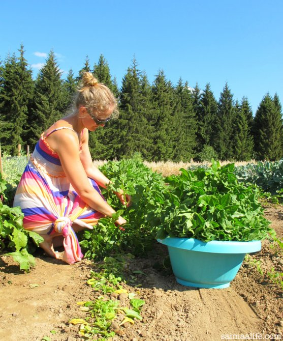 mother-cutting-spinach-on-vegetable-garden