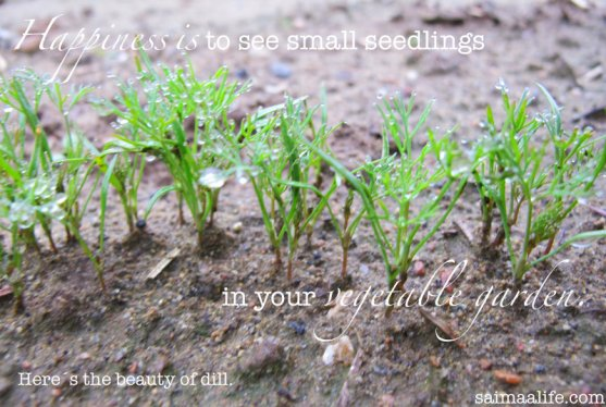 happiness-is-to-see-small-seedlings-in-your-vegetable-garden
