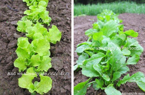small-salads-and-rucola