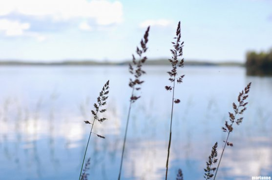 sunny-summer-day-on-lake