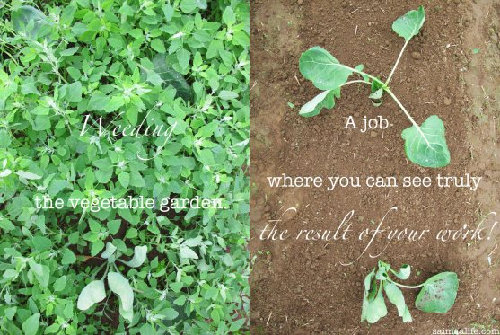 weeding-job-where-you-can-see-result-of-your-work