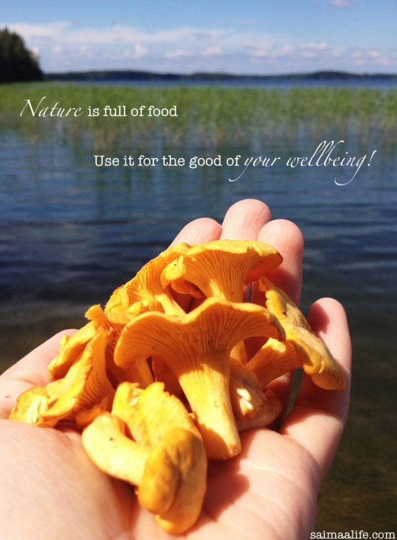 wild-food-chantarelles-from-finland