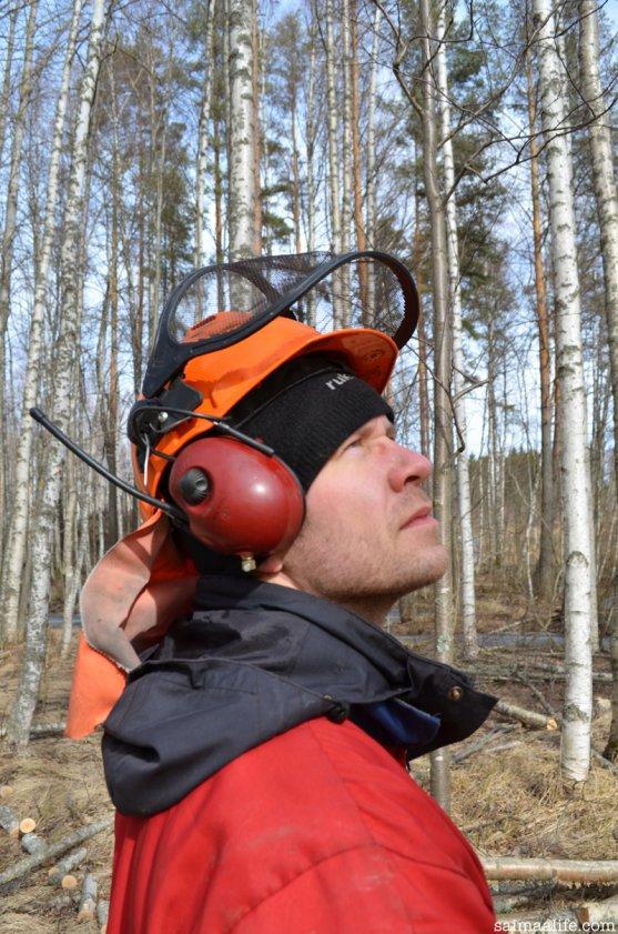 finnish-timberjack-in-birch-forest