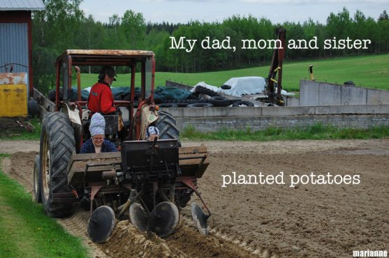 grandparents-and-sister-planting-potatoes