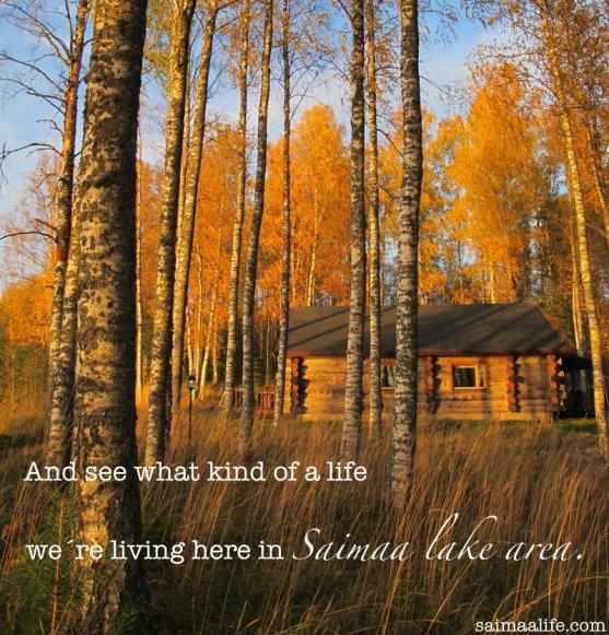 finnish-life-in-saimaa-lake-area-in-finland