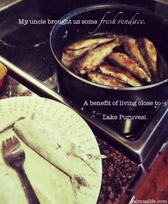 fresh-vendace-from-lake-puruvesi