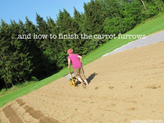 finishing-carrot-furrows