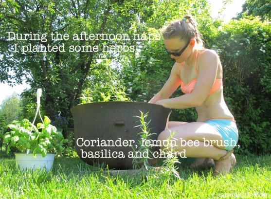 mother-planting-herbs-in-garden