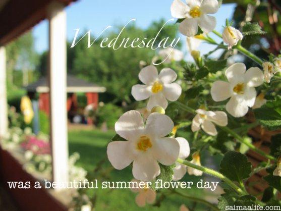 summer-flowers-in-garden