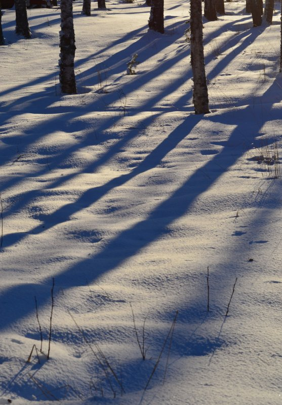 winter-sun-tree-shadows