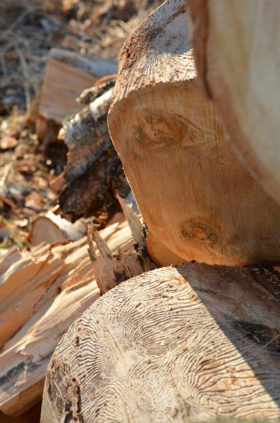 firewood-birch