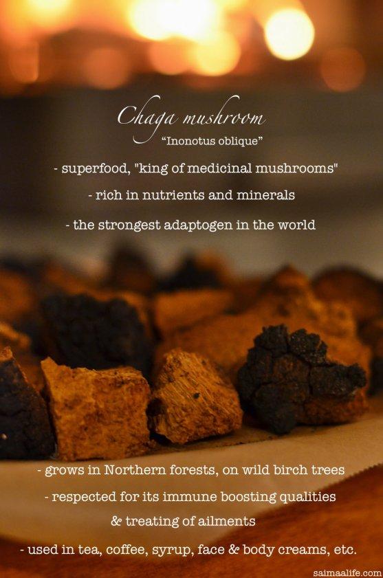 chaga-mushroom-superfood