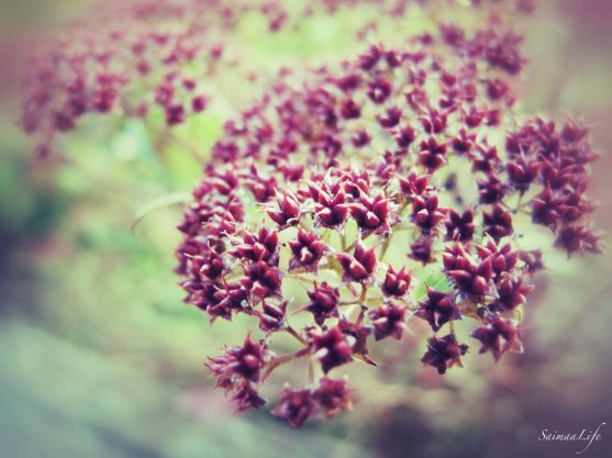2_kukka