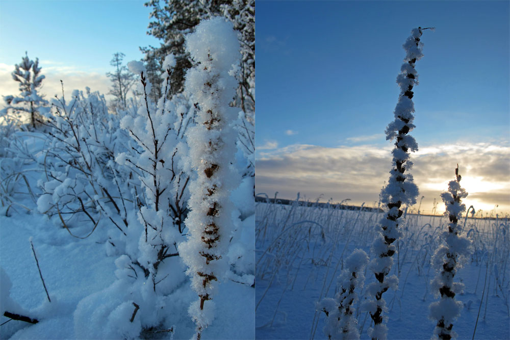 beautiful-frozen-plants