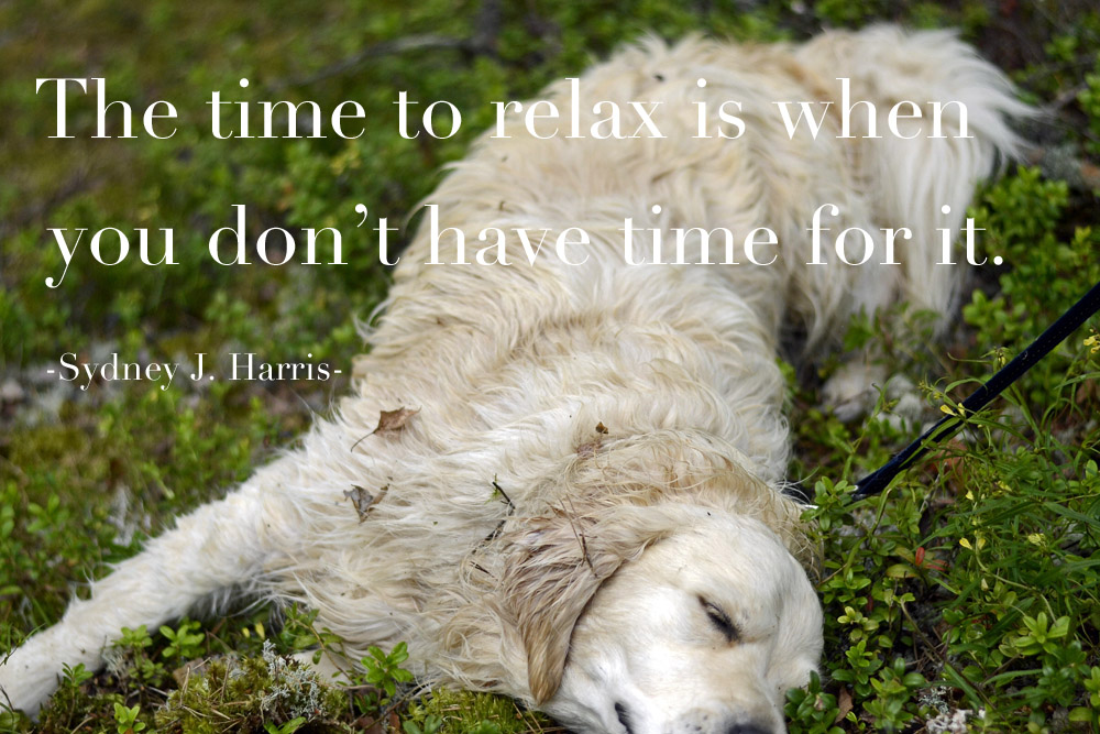 the-time-to-relax-is-when-you-do-not-have-time-for-it