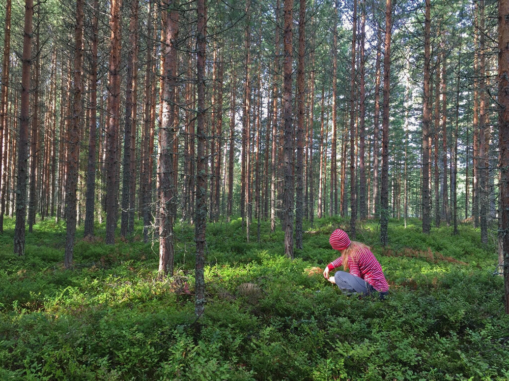stress-away-in-the-blueberry-forest-3