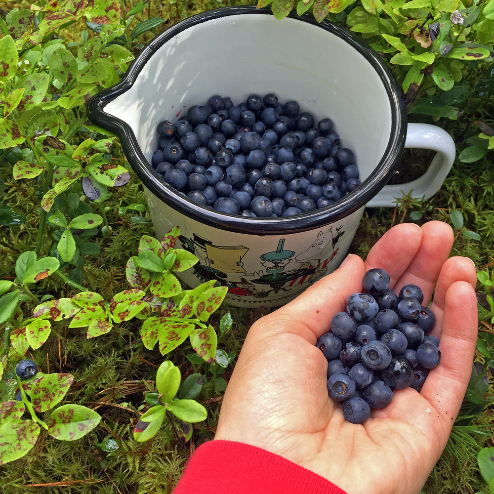 stress-away-in-the-blueberry-forest-5