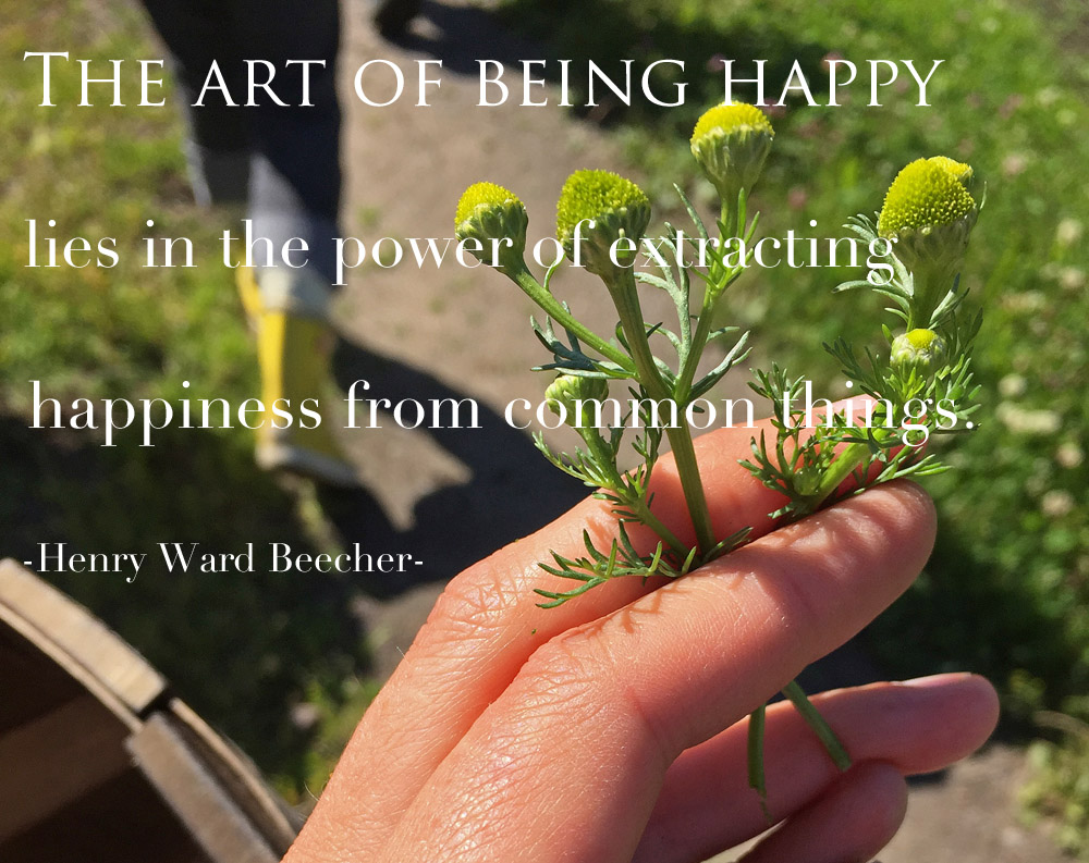 the-art-of-being-happy-quote