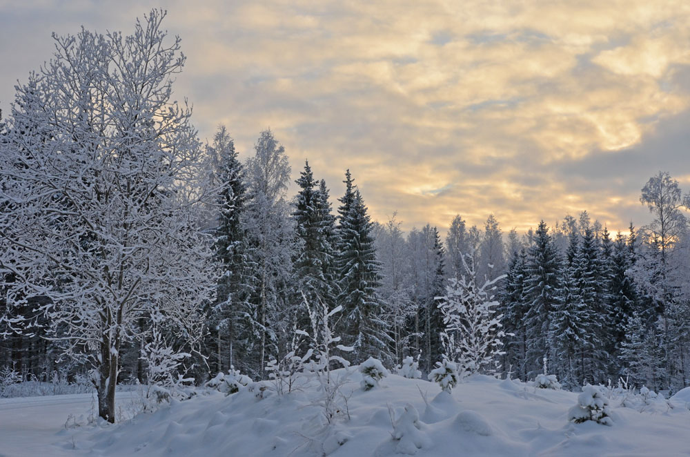 BACKGROUND-WINTER-PHOTO