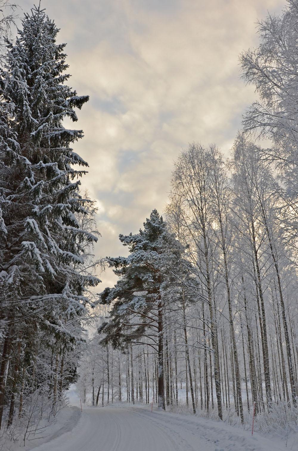 nature-photo-14