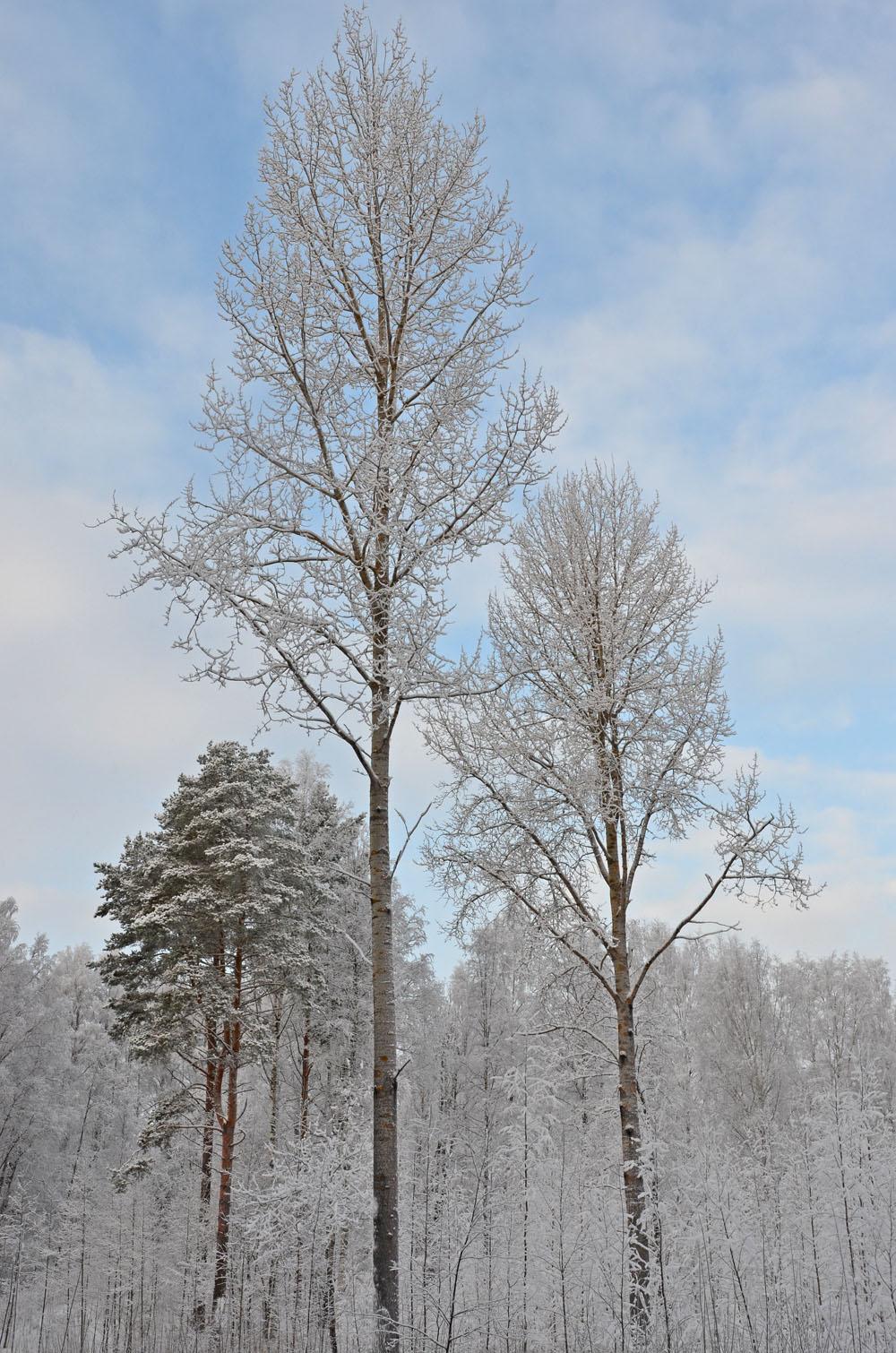 nature-photo-3