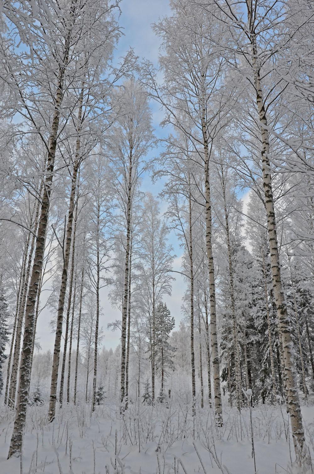 nature-photo-4