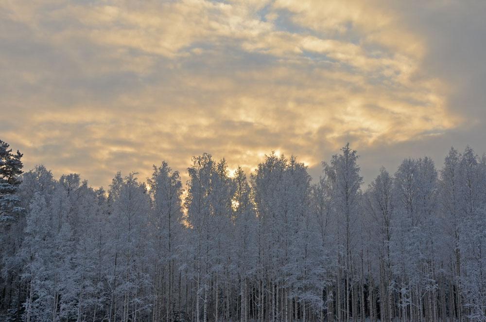 nature-photo-7