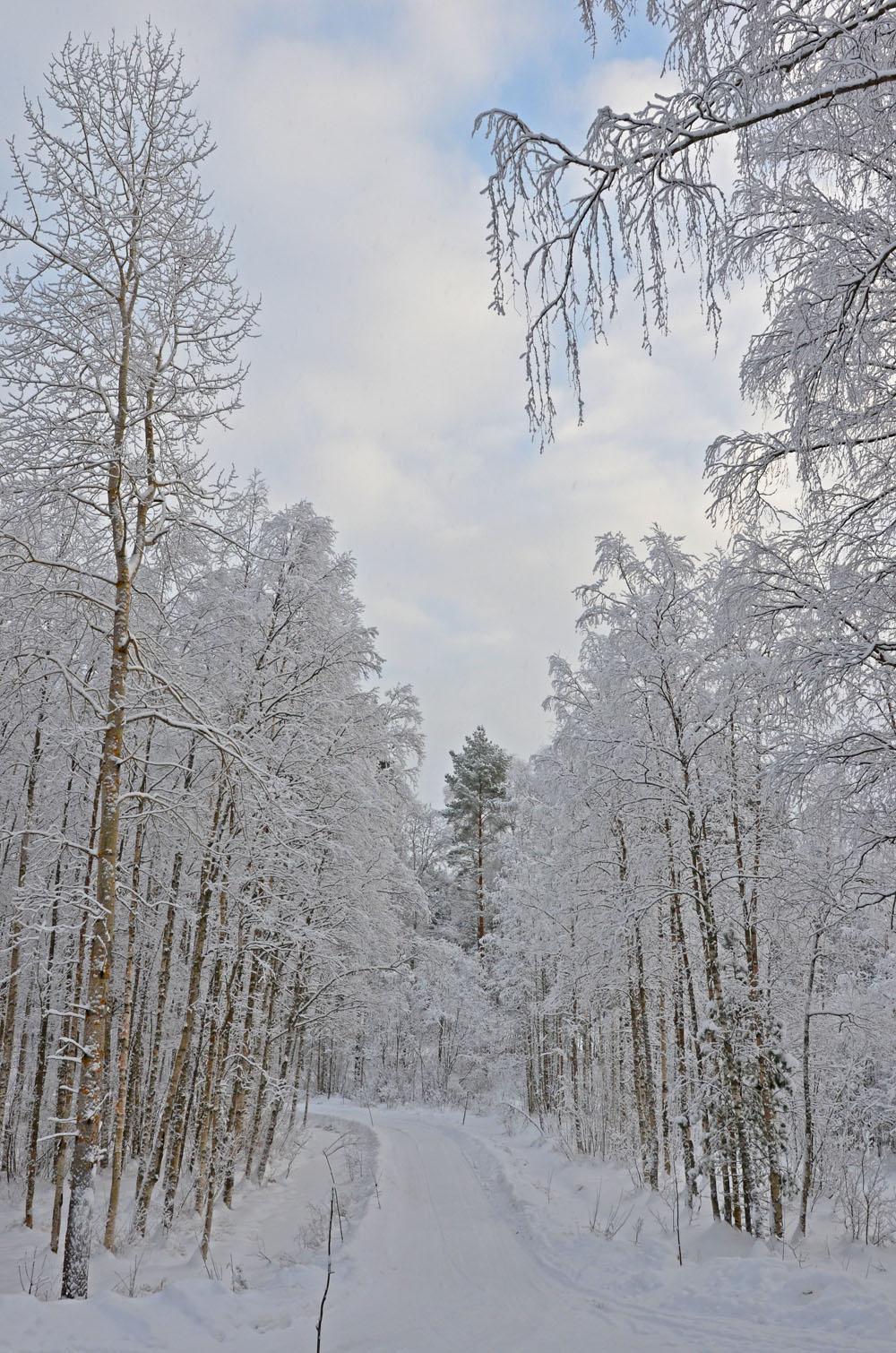 nature-photo2