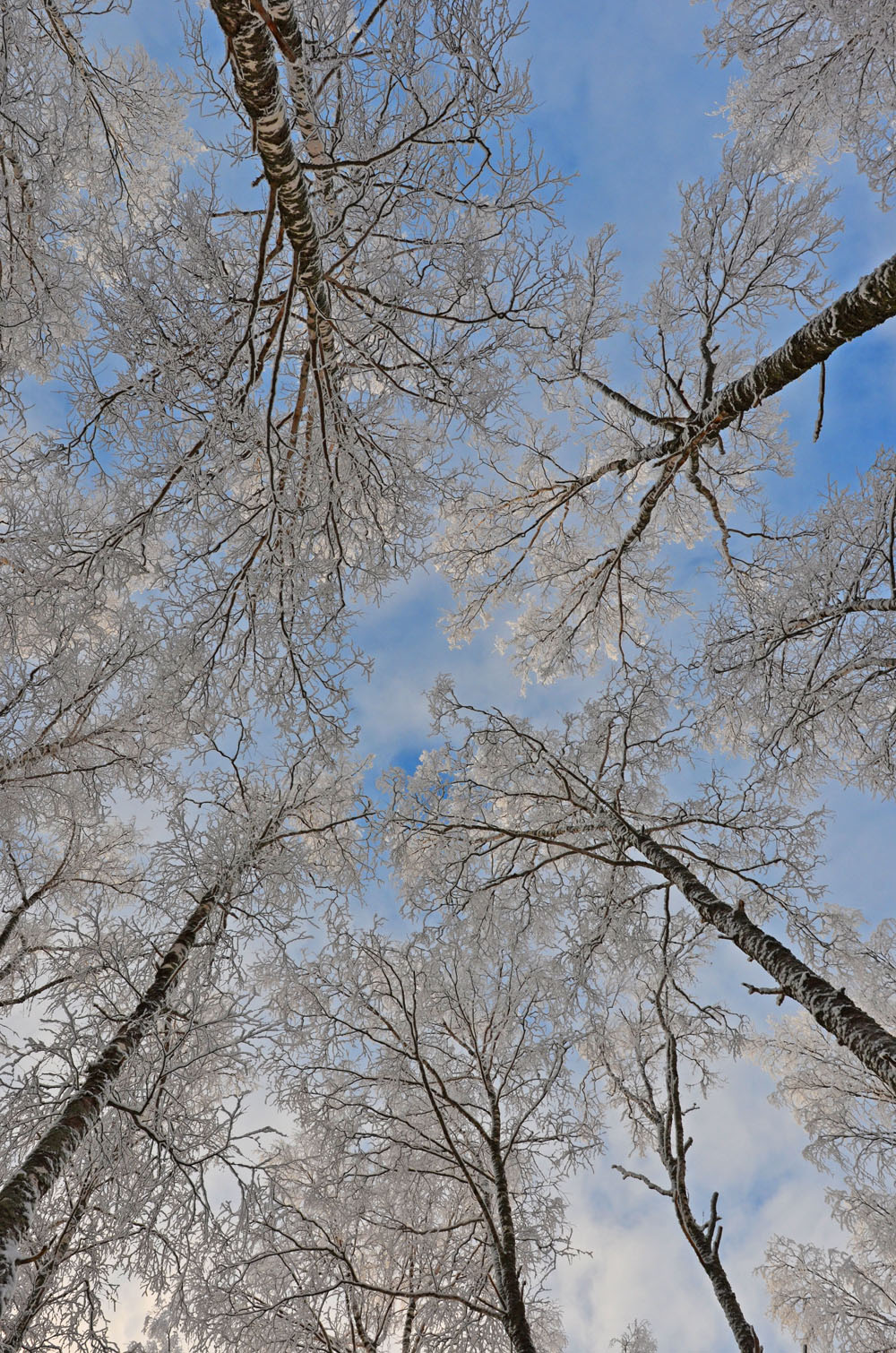 just-be-and-watch-blue-sky-and-snowy-trees