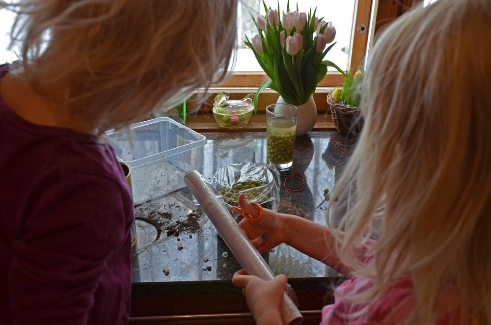 planting-pea-seeds