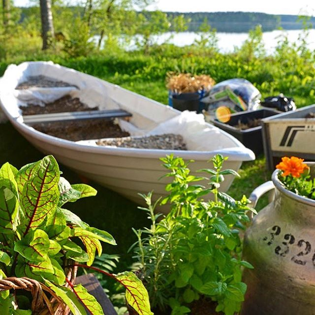 Old boat gets a new life in our garden thishellip