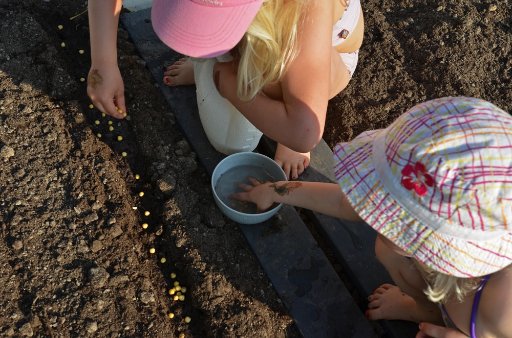 children-planting-seeds-to-vegetable-garden