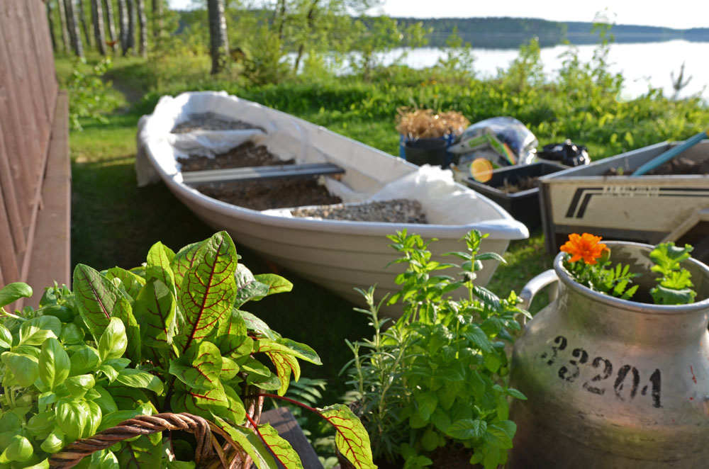 planting-vegetable-garden-in-boat