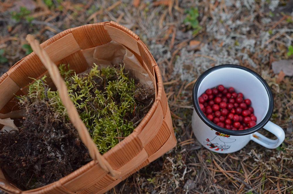 lingonberries-in-moomin-mug-saimaalife