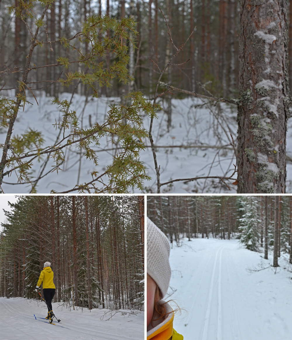 cross-country skiing in saimaa lake area forest