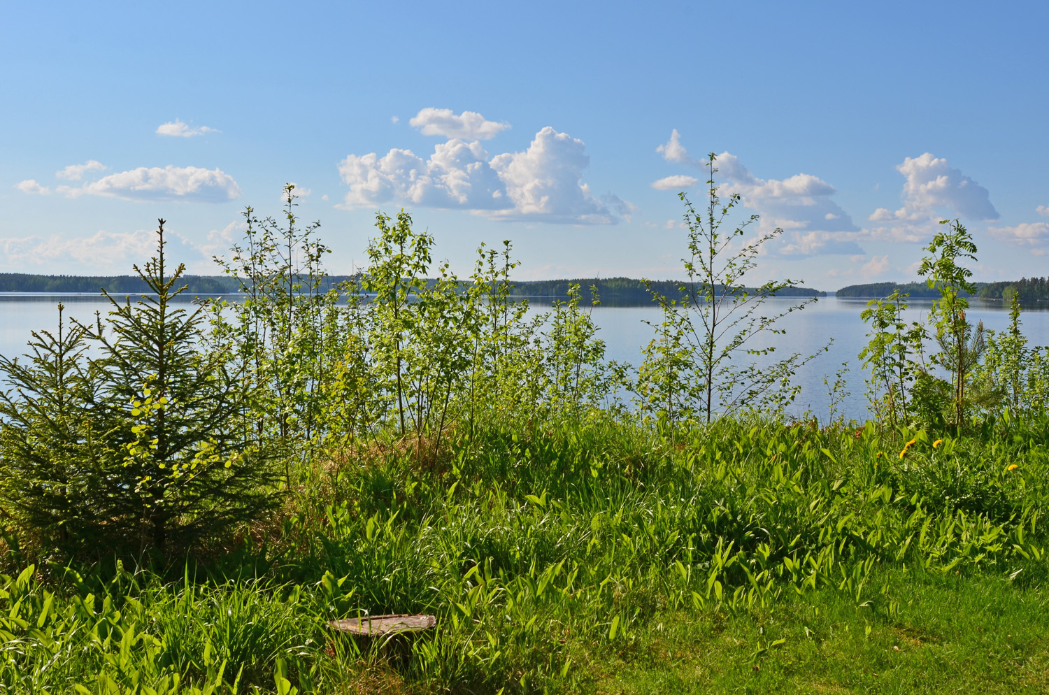 Summer day in Saimaa, Finnish Lakeland - SaimaaLife.com