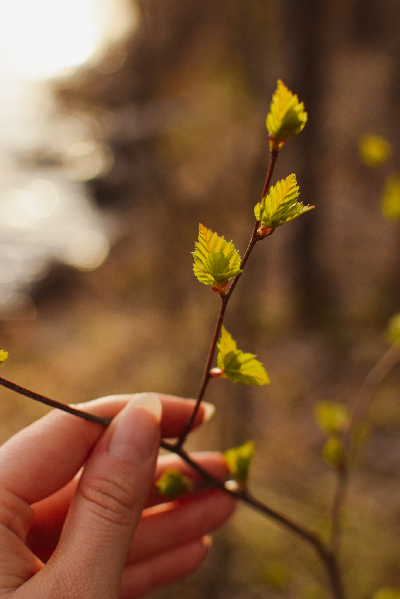 Woman touching the spring nature birch leaves in Saimaa, Finland