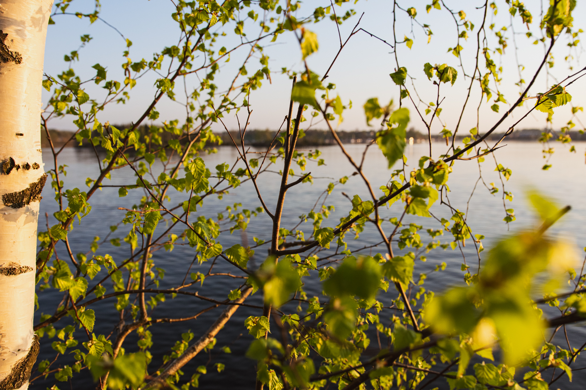 Spring nature greenness by the blue lake Saimaa in Finland