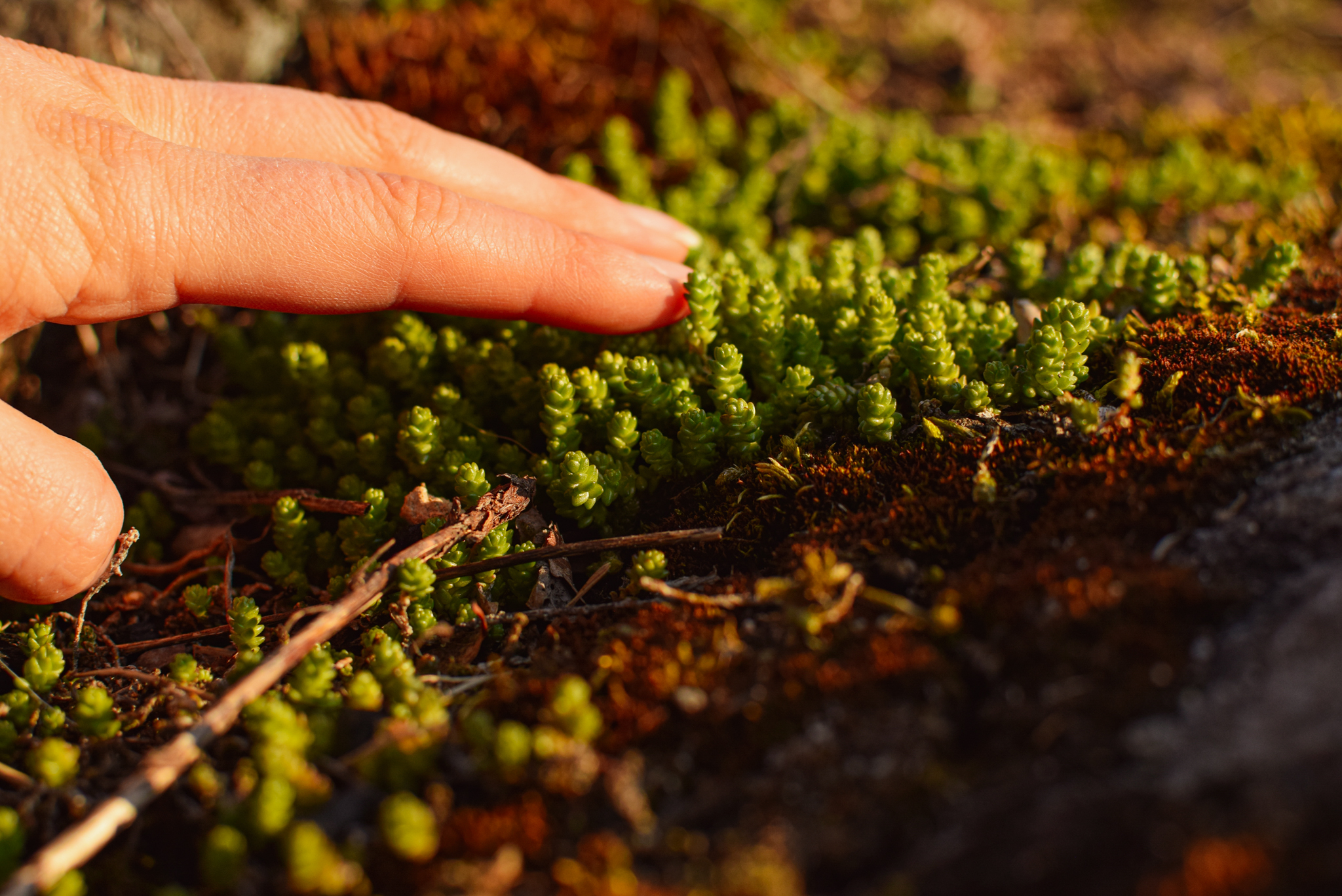 Hand touching spring nature greenness in Saimaa, Finland