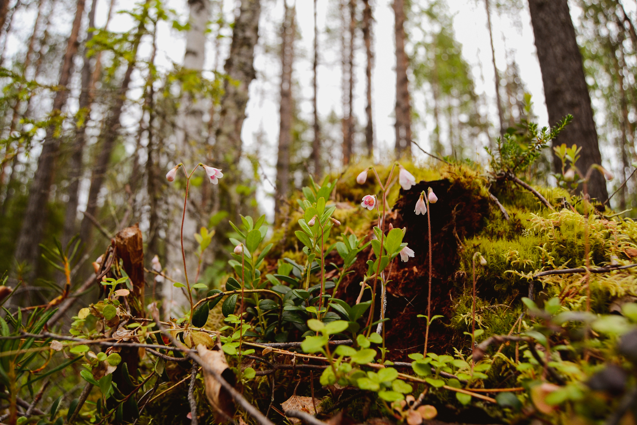Finnish summer ways to connect with nature and yourself by having a forest walk