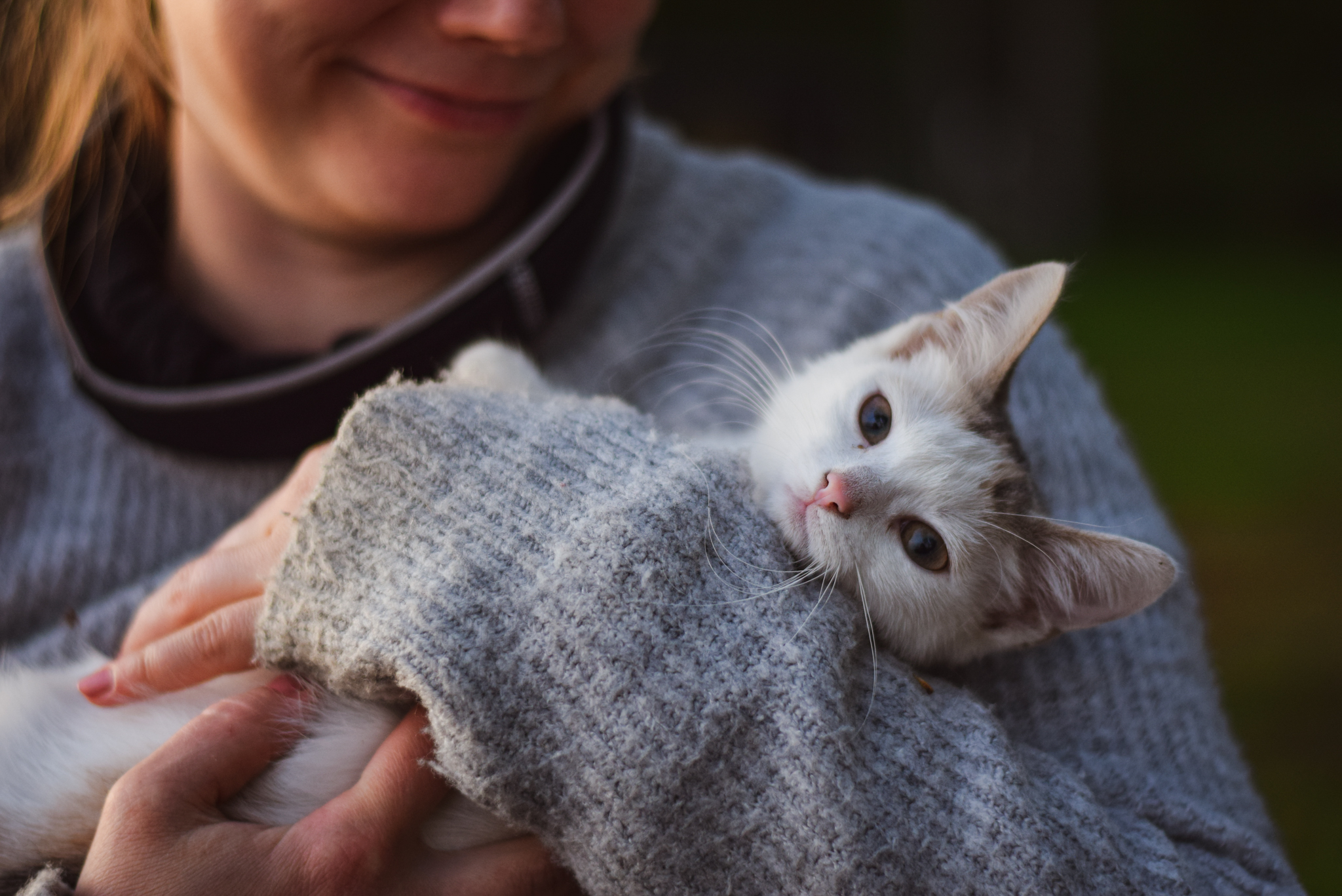 Finnish ways to connect with nature and yourself by spending time with animals