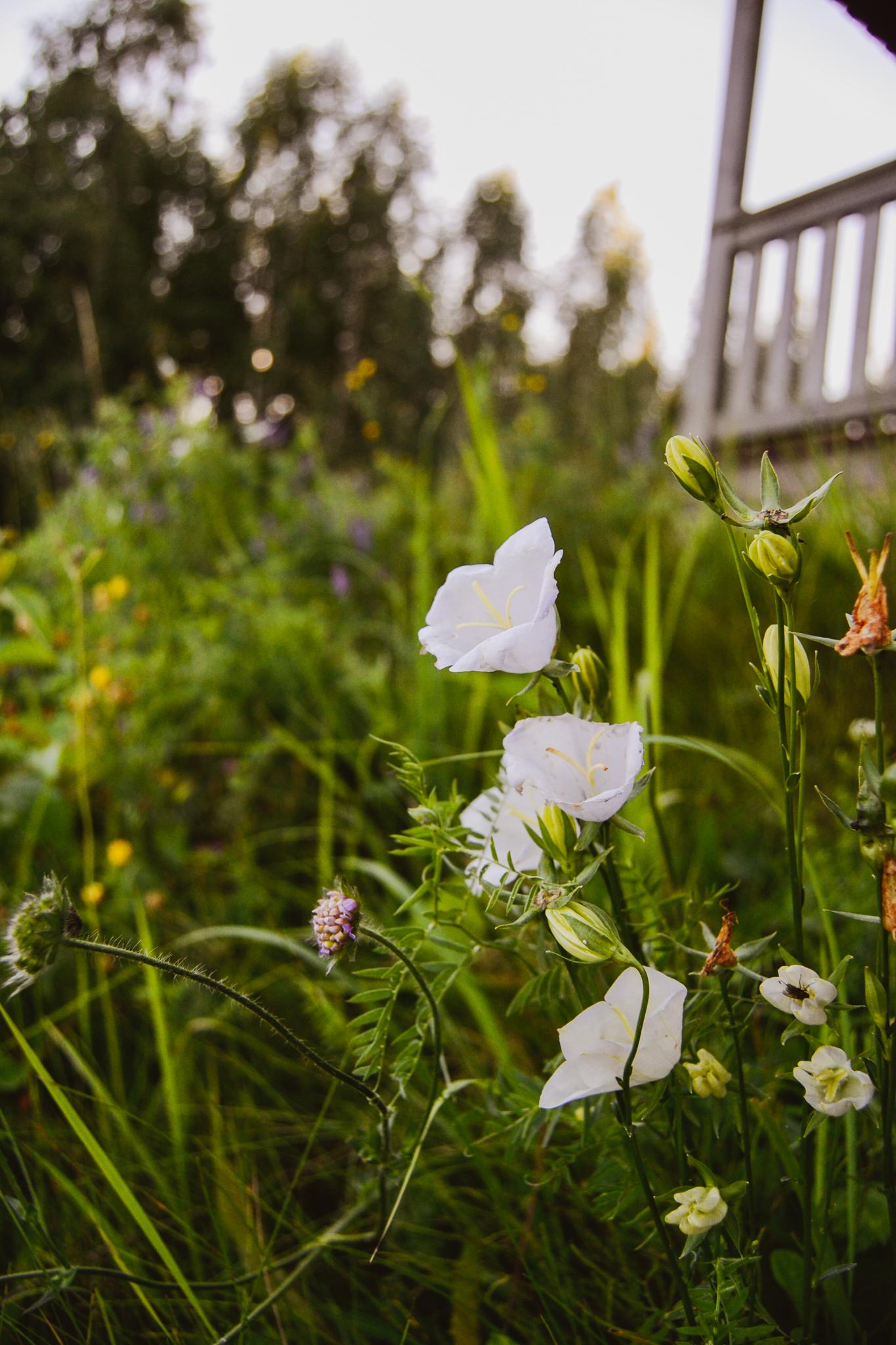 finnish summer flowers