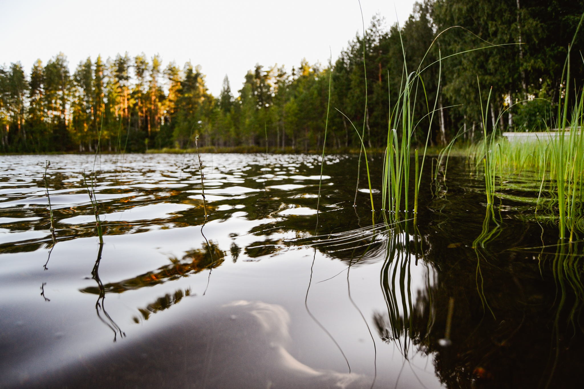 waves of Finnish lake water on calm summer evening