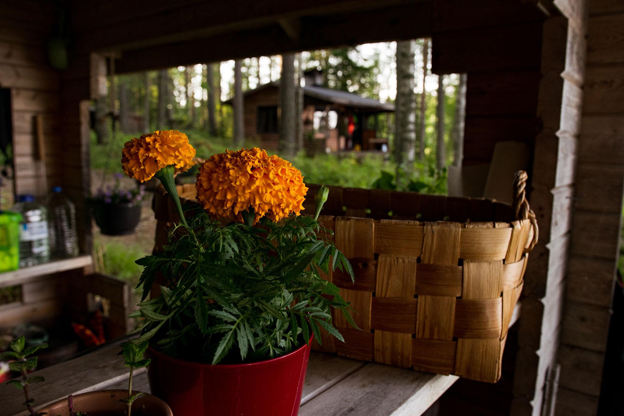 saimaalife style finnish summer cottage in saimaa finland